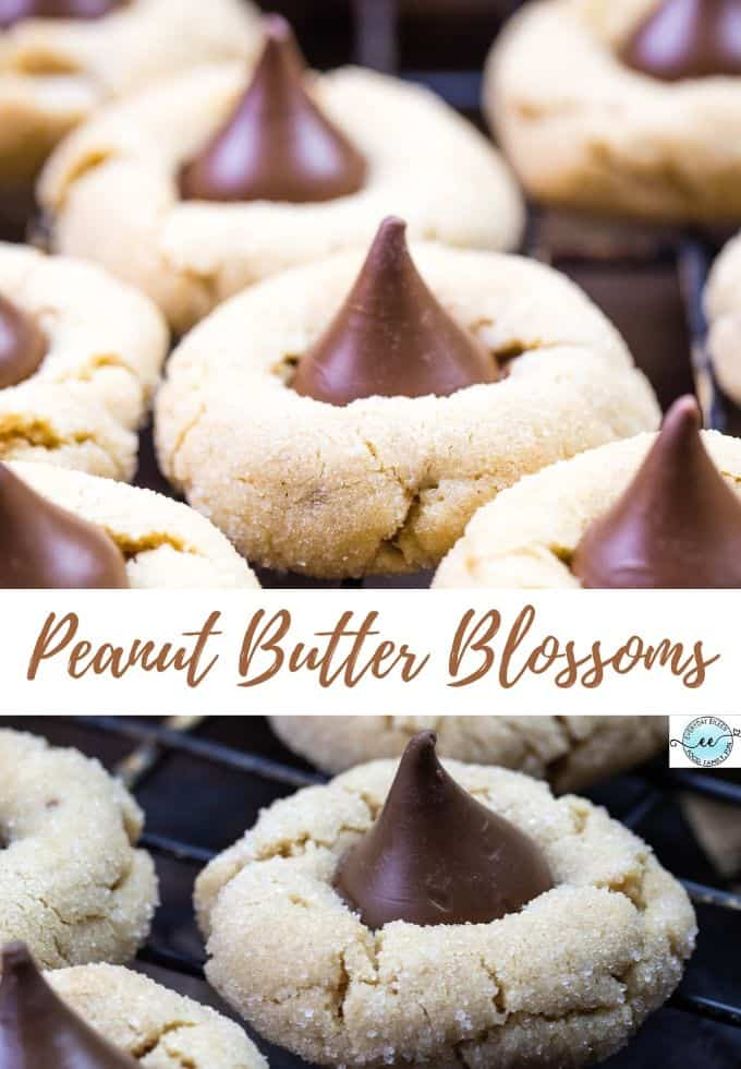 Classic Peanut Butter Blossoms, everyone's favorite cookie with an easy tutorial with perfect results every time. Jam-packed with peanut butter. Perfect for the holiday cookie exchange, kids' favorites, tailgate parties, faamily gatherings. #peanutbutterblossomcookies #peanutbutterblossoms #everydayeileen #christmascookies via @/everydayeileen/